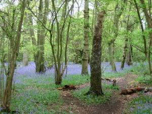 Castle Coppice near News Wood, Malvern Hills