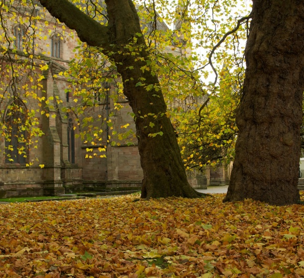 AutumnCathedral1
