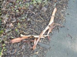 7.Birch Bark