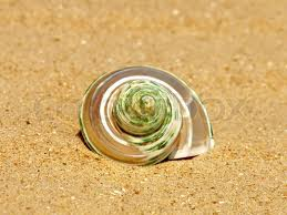 'Nacreous conch shell on sandy beach' www.colourbox.com