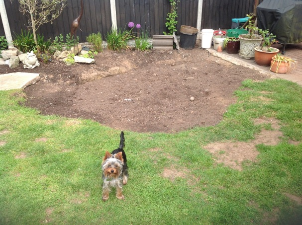 Mabel guarding the new topsoil