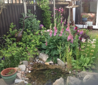 Pinks Purples Pond1