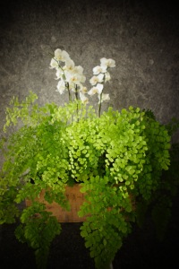 orchids and maidenhair fern http- www.fleuropean.com theres-no-denying-destiny