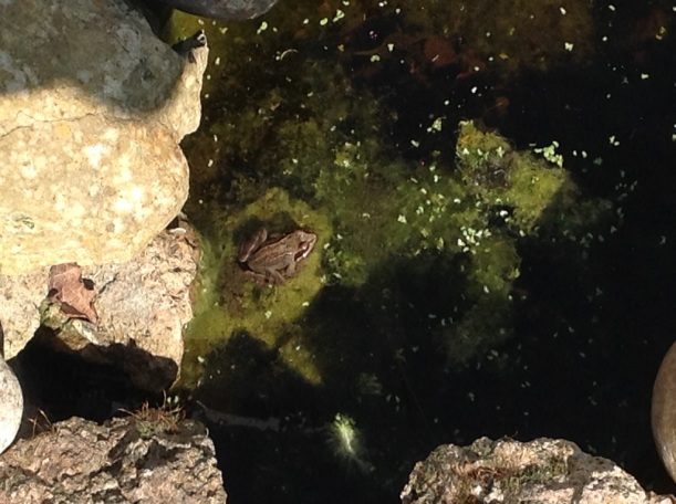 Frog 2 April 2019.jpg